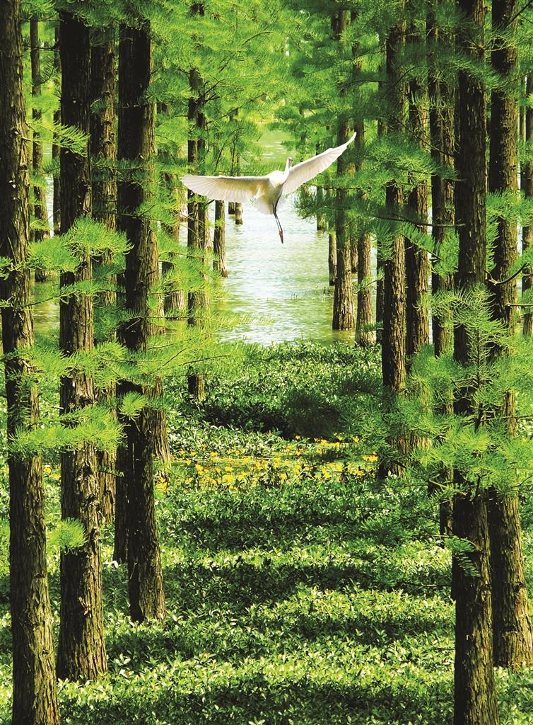 壁纸 风景 森林 桌面 754_1024 竖版 竖屏 手机